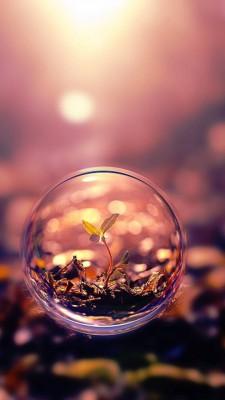 عکس زمینه گیاه در حباب