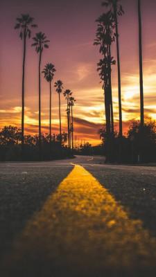 عکس زمینه غروب و جاده و نخل های بلند