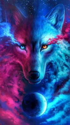 عکس زمینه گرگ سرخ آبی