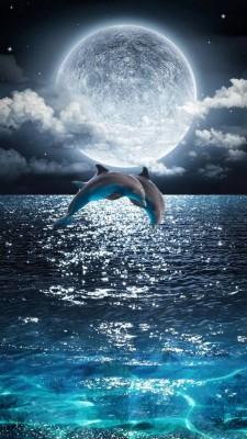 عکس زمینه دلفین و شب دریا