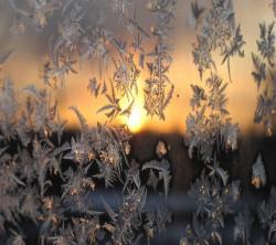عکس زمینه گل یخ