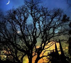 عکس زمینه شبح ساخه های درخت