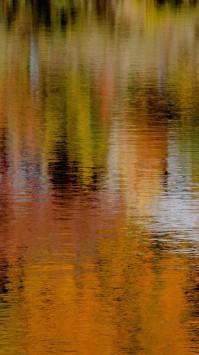 عکس زمینه نمای رنگ پاییزی درختان در آب
