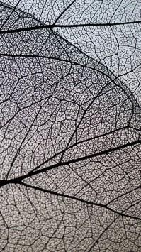 عکس زمینه برگ خشک زیبا