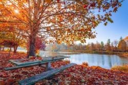 عکس زمینه برگ های پاییزی قرمز و نارنجی در کنار برکه آب