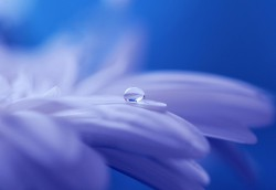 عکس زمینه قطره آب بر روی گل بنفش