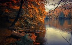 عکس زمینه درختان پاییزی در کنار دریاچه