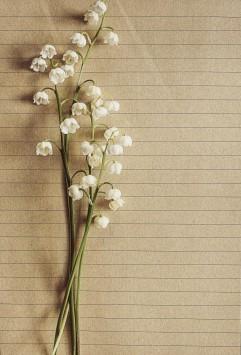 عکس زمینه ارکیده های سفید بر روی کاغذ راه راه
