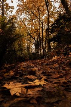 عکس زمینه برگ های خشک پاییزی روی زمین