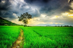 عکس زمینه جاده ای در مزرعه سبز با آسمان ابری