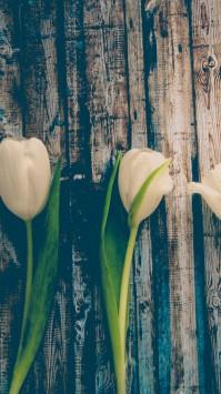 عکس زمینه گل سفید روی تخته چوبی