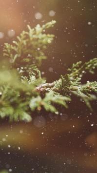 عکس زمینه بارش برف و کاج زیبا