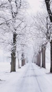 عکس زمینه مسیر برفی سرد و سفید