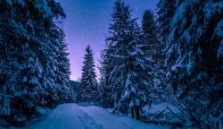 عکس زمینه درختان کاج پوشیده از برف