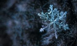 عکس زمینه گل برفی در زمستان