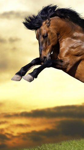 عکس زمینه پرش اسب قهوه ای مسابقه ای