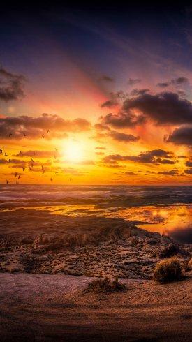 عکس زمینه پرندها و غروب خورشید در صحرا