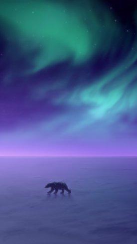 عکس زمینه شفق قطب شمال خرس قطبی