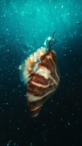 عکس زمینه عروس دریایی زیر آب اقیانوس