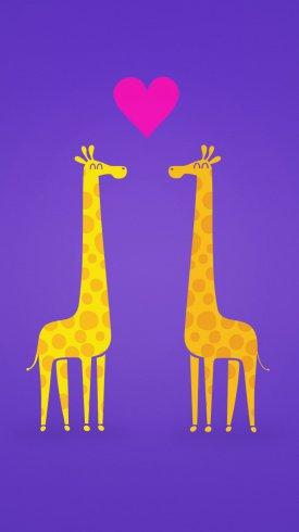 عکس زمینه قلبی میان دو زرافه عاشق