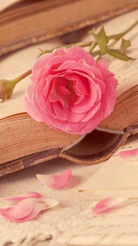 عکس زمینه قلب و عشق و گل رز صورتی